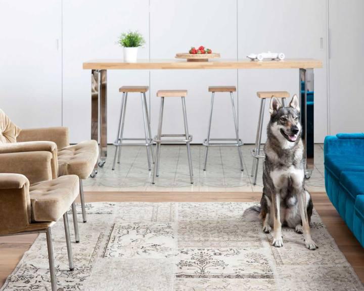 spettacolare-appartamento-bel-cane